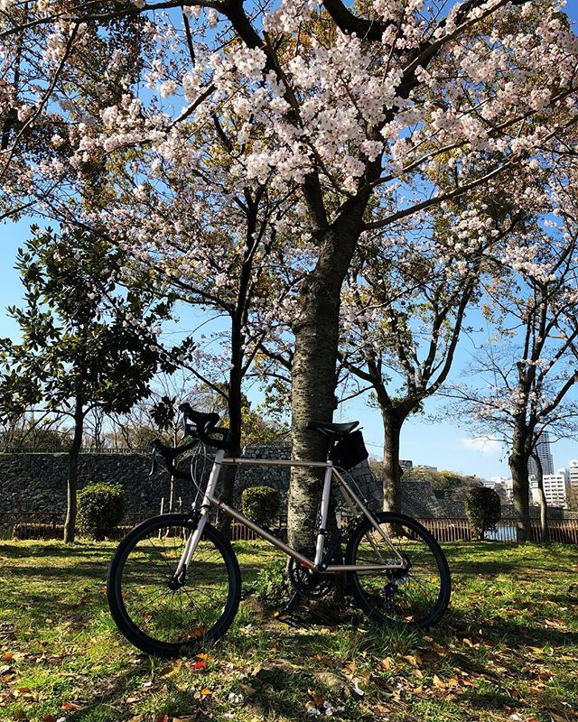 HerionROsaka City / Japan#japan #instagood #instacycle #roadie #roadcycle #roadbike  #love #bicycle #cycling #bike #roadbike #fujicycle #starbacks